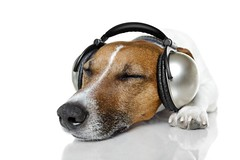 Quiet dog (www.ilmicrofono.it) Tags: adorable animal audio baby background brown canine cute doggy earphones enjoy funny goofy head headset headphone headphones humor isolated joy listen looking male mp3 music musical pet player pretty puppy relaxation rhythm sound stereo studio sweet tiny tunes white young