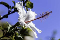 PARQUE FORESTAL III (Yayo Tortosa) Tags: flora flores melilla2018 nikkor1052 nikondf parqueforestal pwmelila