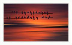 Waiting (Fr@nk ) Tags: birds fantasy sunset colors mrtungsten62 frnk rec0309 recent europ12 orange landscape seascape framed pigeon europe ektachrome preset nd icm