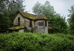 (Rodney Harvey) Tags: abandoned house oregon multnomah waterfall rain wet rural decay columbia river moss moist green