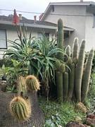 (elena_photos) Tags: california cactus