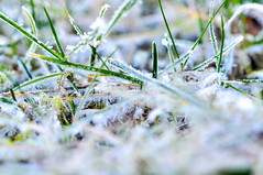 """3/52 - """"Macro"""" (LittleSquirrel27) Tags: week32019 startingtuesdayjanuary152019 52weeksthe2019edition macro winter winterdream cold pattern fascinating snow forms nature gras covered with details whiteandgreen rimeice ice winterlife beautifulworld"""