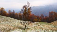 verso l'inverno... #2 (Roberto Defilippi) Tags: 2019 42019 rodeos robertodefilippi natura nature paesaggio landscape montagna mountain tmpanel neve snow autunno autumn