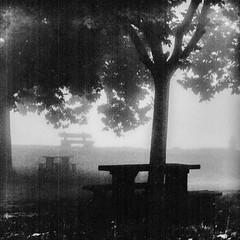 BRUME (zventure,) Tags: zventure nice noiretblanc noir nb nuit analogic nature arbres brume brouillard banc