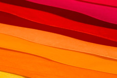 Banish those (January) blues (Barrie T) Tags: smileonsaturday multicolora colour home macrodreams