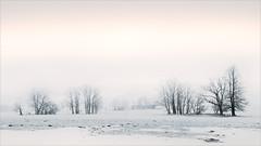 Quiet land (Eva Haertel) Tags: eva haertel landschaft landscape winter season jahreszeit schnee snow bäume trees feld field wiese meadow nebel fog misty tschechien czechrepublic tschechischerepublik dorf village weather wetter