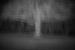 Spirit of Trees (1) (Ger208k) Tags: ireland dublin stannespark icm intentionalcameramovement multipleexposure abstract nature trees blackandwhite greyscale gerardmcgrath