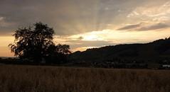 DSC05701 (ursrüegsegger) Tags: linden juli august getreideernte bauernhöfe landschaft regenbogen