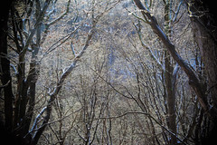 Fairytale Forest (Violet aka vbd) Tags: pentax k1ii k1markii hdpentaxda55300mmf4563edplmwrre ct connecticut newengland vbd woods trees handheld ice manualexposure 2019 winter2019 forest branches trumbull
