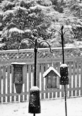 Baltimore MD ~ feeding depot (karma (Karen)) Tags: baltimore maryland home backyard birdfeeders fences snow dof bokeh bw mono hmbt hff