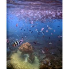 Under water wonder (Robyn Hooz) Tags: pesci fish reef corallo barriera belitung indonesia mare life clear water scuba sea