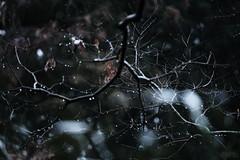雨のあいだはここに居るよ。 (atacamaki) Tags: xt2 50140 xf f28 rlmoiswr fujifilm jpeg撮って出し atacamaki nature rain tree 出島の家 雨 light japan nofilter xf50140mm かすみがうら 日本 茨城