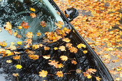 Color-Soaked (Chancy Rendezvous) Tags: chancy rendezvous dave lawler blurgasm wash washout leaves foliage car black yellow color fall autumn rain wet soaked chancyrendezvous davelawler