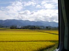 Rice and mountains (しまむー) Tags: panasonic lumix dmcgx1 gx1 sigma art 19mm f28 dn round trip train