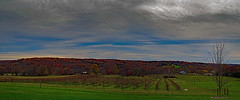 Sheep in the vineyard (boriches) Tags: vineyard sheep ozarks missouri autumn