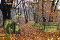 Autumn, Troy, Leeds (Kingsley_Allison) Tags: autumncolours westyorkshire woodland leeds troy horsforth nikon nikond7200 serene foliage nature outdoors woods autunm