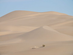 Nothing Stays the Same (Synapped) Tags: approved imperial sand dunes dune yuma arizona tan brown