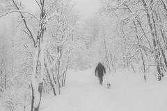 Man, dog and snow (Bente Nordhagen) Tags: hund løype mann snø sti tre trær vinter winter snow man dog trees