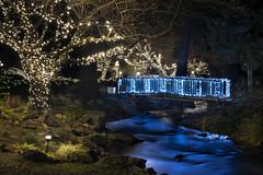 Footbridge (Curtis Gregory Perry) Tags: hoodriver oregon river stream creek night longexposure blue light tree christmas white hotel water nikon d810 bridge footbridge