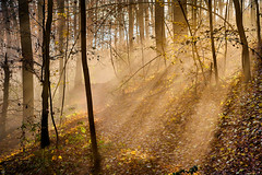 intervals (Aspenlaub (blattboldt)) Tags: nature woods forest mist fog path autumnleaves color emount sonyalpha7rmiii sonyilce7rm3 zeiss loxia2485sonnar sonnar rayoflight sun shadow interval atmosphere mood trees manualfocus europe thuringiagermany saalehorizontale jena polfilter polarizer ⚶ zeissloxia2485sonnart specialthankstochristophecasenaveandhisteamfromzeissfortheirpersonalinvolvementinthedevelopmentoftheloxialensline leftover remains