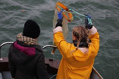 Collecting plastic samples 3 (MarBio Abbie) Tags: plastic microplastic trawl marine biology marinebiology stem science boat sea estuary plankton fieldwork pollution beachcleanproject