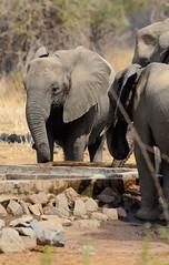 _DSC9004 (acomb) Tags: tanzania roadtrip ruaha tandala