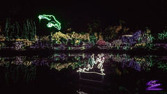 NEON FROG-SHORE ACRES-2017-HDR-4032WX2268H-300PPI© Cody Jacobson-ZEN MOUNTAIN MEDIA all rights reserved (codyjacobson@zenmountainmedia.com) Tags: neon frogshore acres2017hdr4032wx2268h300ppi zen mountain logo tshirt poster design photohsop digital art portfolio landscape photography praire creek redwoodnational forest ca nikon samsung galaxy s8 canon t6i retouching aurorahdr photoshop camera raw shore acres botanical garden night lights christmas display frog splash colors colorful beautiful tourism travel oregon coos county 2017 nature trees hiking outdoors picoftheday photo 2018 exploringtheartofimagination zenmountainmediacom