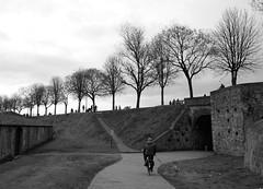 Pomeriggio d'inverno sulle mura della città (Darea62) Tags: people street blackandwhite trees lucca tuscany toscana biancoenero bw monochrome blackwhite mood bike dog cloudy road pathway path outside