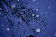 Winterlich (richard.kralicek.wien) Tags: winter snow tree