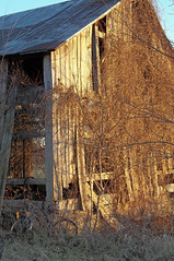 Aged (LivGreen) Tags: barn farm bike vines building wooden evening light sunset old faded