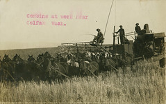 Combine at Work, 1912 - Colfax, Washington (Shook Photos) Tags: postcard postcards rppc realphotopostcard realphotopostcards wheat field harvest wheatharvest harvesting combine thresher horse horses equine farm farming farmfield agriculture colfaxwashington colfax washington whitmancounty