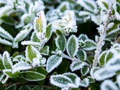 Le froid fige ce qu'on voit briller le matin (elmeziani.ilias) Tags: morning cold freezing