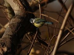 IMG_4740 (monika.carrie) Tags: monikacarrie wildlife scotland seatonpark