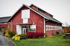 Greenbank Farm circa. 1904 (Barn B) Gary Ando Barn (SonjaPetersonPh♡tography) Tags: whidbeyisland washington washingtonstate stateofwashington barns redbarn nikon nikond5300 greenbankfarm circa1904 historicsite historic heritage heritagebuilding heritageregisteredproperty whidbeypiescafe grocerystore store barn greenbank shops fields forests wetlands winetastingshop restaurant greenbankcheese artworksgallery robschoutengallery