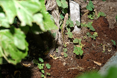 Al Rayo (José Ramón de Lothlórien) Tags: hojas treboles ramas flores plants sol verde green follage nature naturaleza
