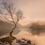 The Lone Tree - Llanberis thumbnail