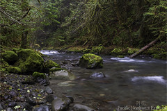 Dungeness River 2958 (All h2o) Tags: dungeness river olympic national forest landscape nature rock moss tree water wilderness autumn fall season pacific northwest mountains peninsula