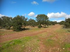 IMG_20181121_125350 (Fernando Moital) Tags: azinhal montado lpn ataboeira castroverde azinheiras