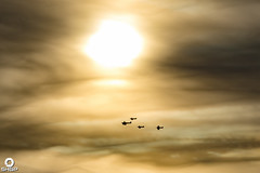 2018 Aviation Year (SHGP) Tags: shgp stevenharrisongreen stevenharrisongreenphotography aeroplane aircraft aviation oldwarden plane raceday racing shuttleworth
