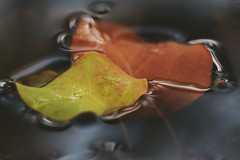 Fine art (steffos1986) Tags: macro bokeh art autumn fall leaves colors vintage pentacon100mmf28 nikond5500 closeup norway fineart