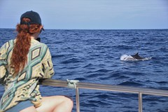Bottlenose dolphins, Faial (MarBio Abbie) Tags: bottlenose dolphin bottlenosedolphin cetacean ocean marine biology marinebiology whalewatching azores faial island