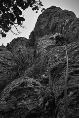 2018-11-18_Otetatopu_9 (1)_web (Rojobin) Tags: rockclimbing sports bankspeninsula newzealand nz crags landscapes cloudy otepatotu