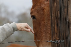 Martha Coleman holds out her hand to one of mules on her farm.