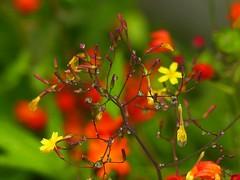 """Nature is an artist""  - HSoS! (libra1054) Tags: natureisanartist smileonsaturday flores fiori flowers fleurs blumen flors flora macro wildflowers droplets"