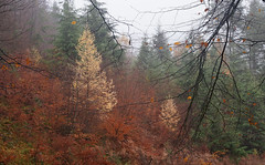 Colour Riot - Impressions of an Exmoor Forest (EmPhoto.) Tags: emmiejgee exmoor forest mist uk autumn sonya7r sonyzeiss2470mm landscapepassion colourriot