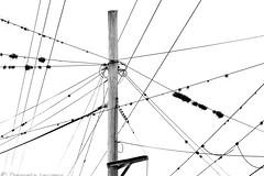 Rutas (Daniela Iaconis) Tags: redes claveldelaire cielos monocromo white black minimalismo negro blanco cables power lines paisaje urbano líneas tensión rutas bw argentina geometrias geometry poste