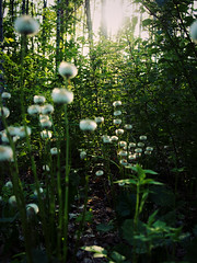 Laajasalo Spring '18 (Dutchdoris) Tags: naturephotography greenery wildflowers finland