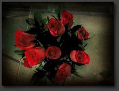 iqbal osman (Iqbal Osman1) Tags: redroses beautifulflowers iqbalosman southafrica petals life love healingimages greatviews red bloodred leaves roses art eastafricancoast god gardens gratitude green flowers floral floraldisplay