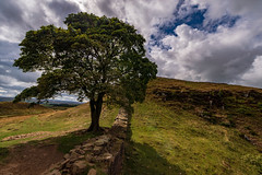 Sycamore Gap, Hadrians Wall (jor5472) Tags: film robinhoodprinceofthieves beautiful landscape outside outdoors visitbritain visitengland hadrian'swall iconic scenery scenic nikon flickr england gap sycamore northumberland