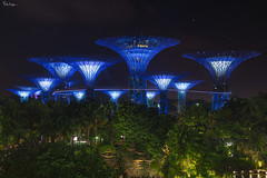 Unique towering trees, with large canopies and colorful lights at night (Karnevil) Tags: asia singapore lioncity downtowncore centralarea centralbusinessdistrict marinabay cityscape skyline skyscrappers gardensbythebay supertree supertreegrove gardengardenwaltz marinacentre marinasouth ocbcskyway marinabaysands lights music classical crowds people zoomlens nikonlens fotodiox lensadapter sony a7rii a7 rii petekreps